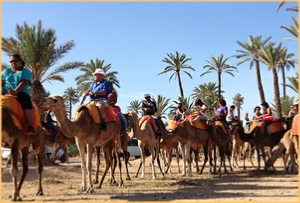 Marrakech palmeries camel ride