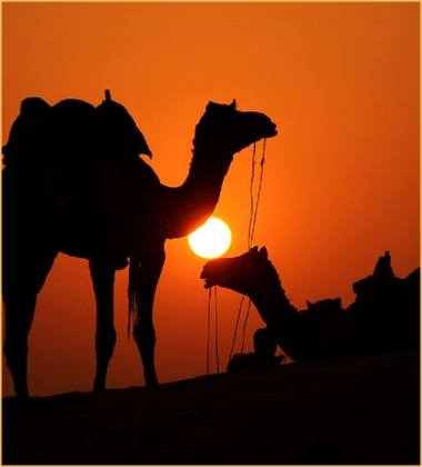 Camel Excursions Chegaga or Merzouga
